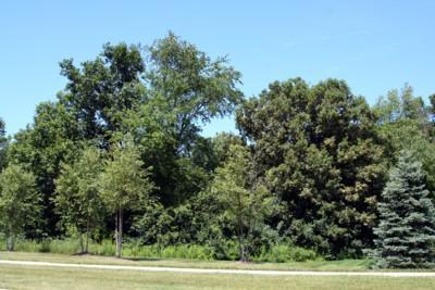 Rosewood Village, Ann Arbor Nature Area