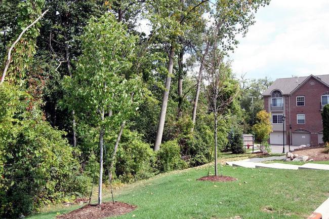 Balmoral Park Condos, Ann Arbor Wooded Area