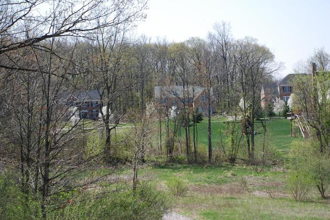 Walnut Ridge Subdivision, Ann Arbor Spring Wooded Area