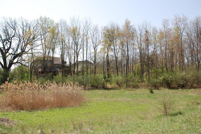 Walnut Ridge Subdivision, Ann Arbor Nature Area