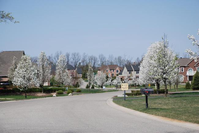 Walnut Ridge Subdivision, Ann Arbor View in Spring