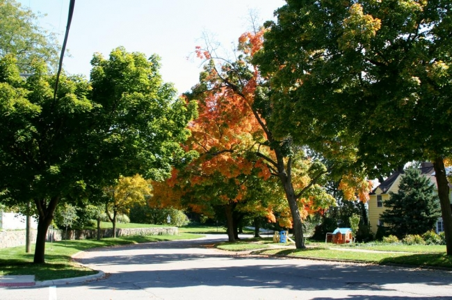 Burns Park Fall Street View