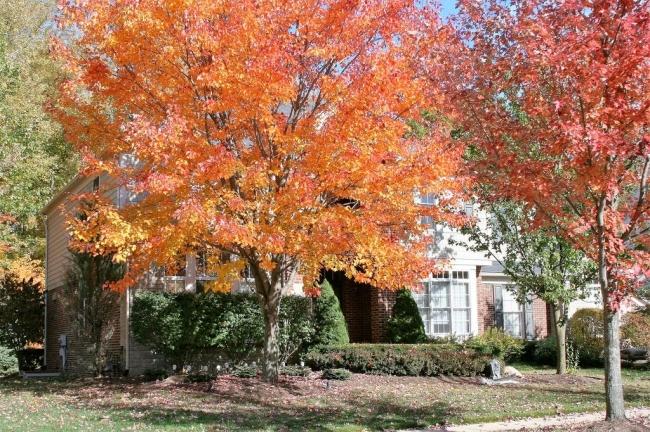 Antique Forest Neighborhood Fall View